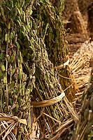 Bundles of dried plants