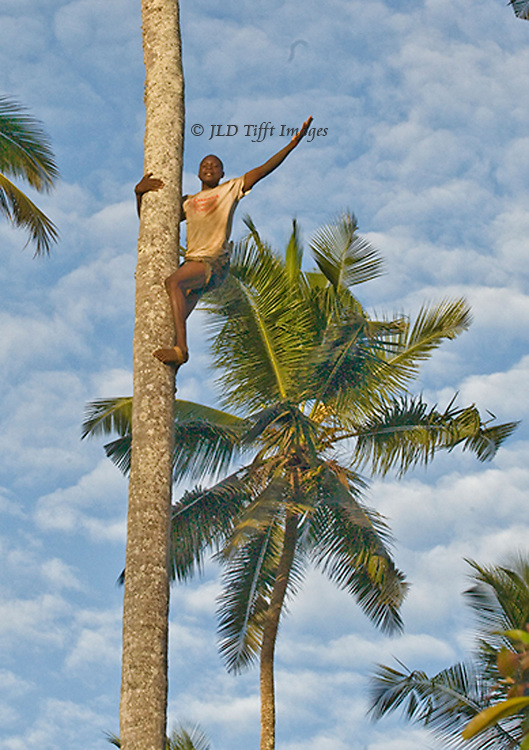 Young man climbs a palm tree in Zanzibar, waving joyously.