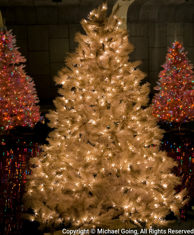White Christmas tree with lights with two red lighted Christmas trees in background