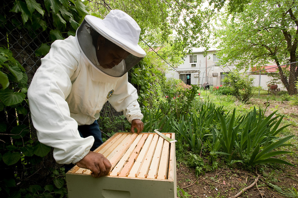 Karen Washington mit ihrem Bienenstock in ihrem Garten in der Bronx, New York..Karen Washington ist die Präsidentin der Community Garden Association und eine langjährige Aktivistin für Grün- und Anbauflächen in armen und vernachlässigten Stadtvierteln. Sie hat neuerdings einen Bienenstock in ihrem kleinen Garten, seitdem die Stadt New York die Bienenhaltung wieder fuer legal erklaert hat.