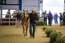 Cody Sapergia, (CAN), Nu Chexomatic - Horse Inspection Reining  - Alltech FEI World Equestrian Games™ 2014 - Normandy, France.<br /> © Hippo Foto Team - Dirk Caremans<br /> 25/06/14