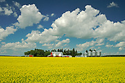 red barn and canola<br />Somerset<br />Manitoba<br />Canada