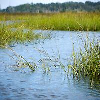 Intercoastal Waterway Marsh