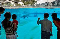 Singapour, Singapore Zoological Gardens, Mandai Zoo, ours blanc// Singapore, Singapore Zoological Gardens, Mandai Zoo, white bear