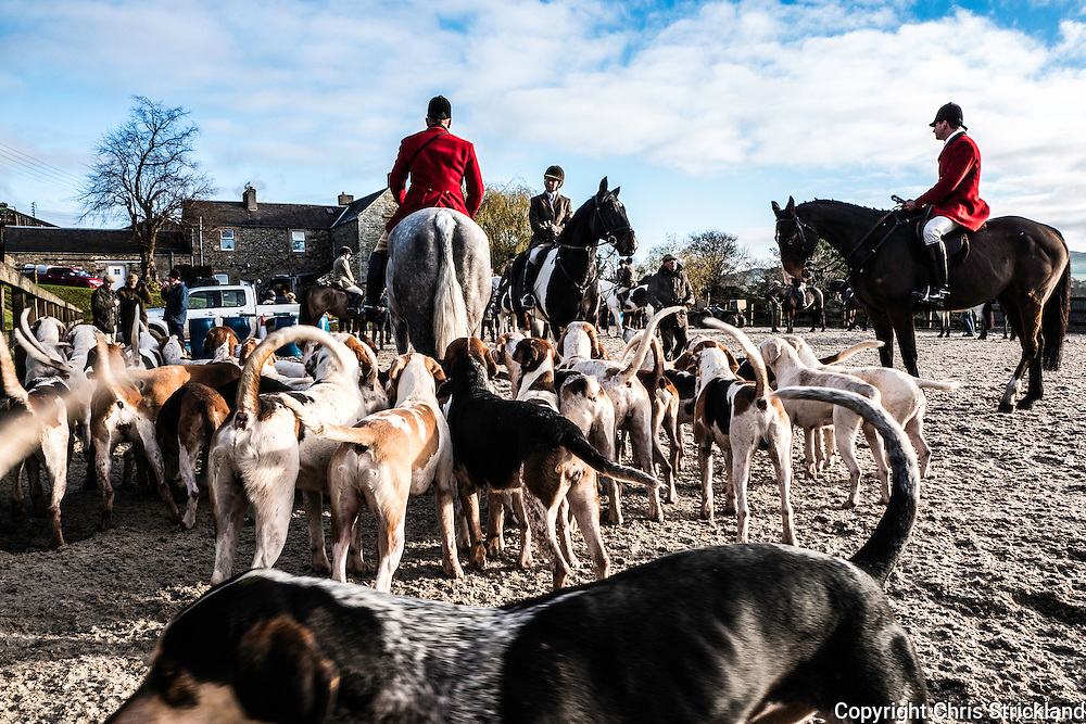 Denholm, Hawick, Scottish Borders, UK. 23rd November 2016. The Duke of Buccleuch foxhounds, the largest pack in Scotland, meet near the village of Denholm in the Scottish Borders. A report commissioned by the Scottish government amd carried out by Lord Bonomy was published this week which concluded that hunting foxes with a full pack of hounds remains an important and effective form of fox control.