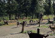 Sled Dogs, Dog musher, Dogs, Sled Dog, Dog sled, Dog Sledding, mushing,  Denali National Park, Alaska