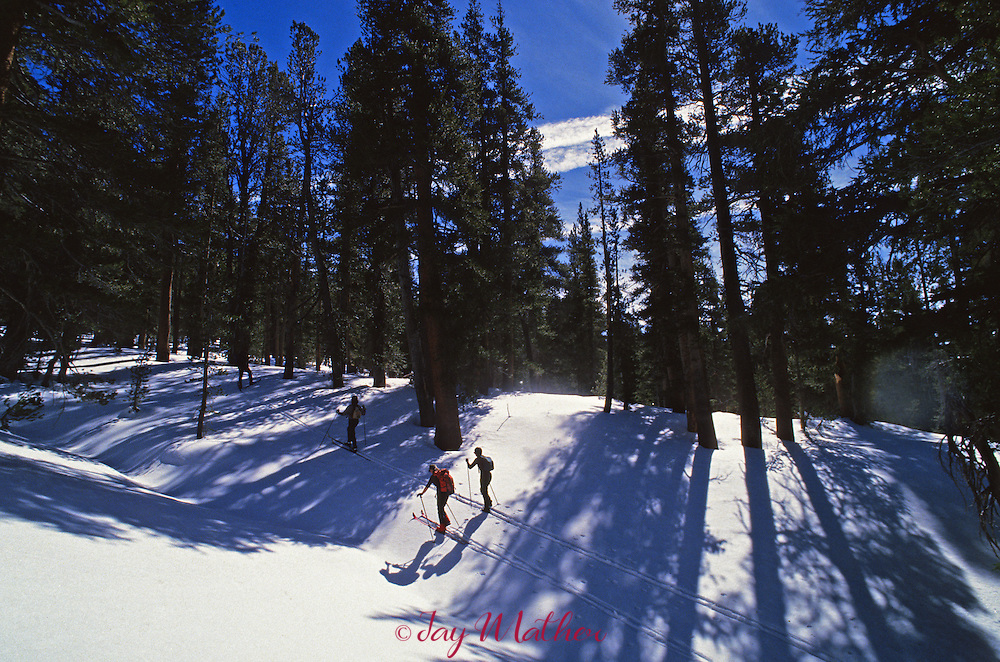 Brent and Tory Finley, the winter rangers in Yosemite National Park,  ski out of Tuolumne Meadows on a day-long excursion to the Kuna Crest.  March 1989