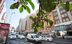 THEMENBILD - ein grüner Baumzweig in der Gran Via. Die Stadt Madrid ist eine der größten Metropolen in Europa. Sie liegt im Zentrum der iberischen Halbinsel und ist Hauptstadt von Spanien. Aufgenommen am 25.03.2016 in Madrid ist Spanien // Madrid is on of the biggest metropolis in Europe. It is located in the center of the Iberian Peninsula and is the capital of Spain. Spain on 2016/03/25. EXPA Pictures © 2016, PhotoCredit: EXPA/ Jakob Gruber