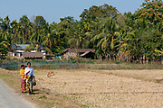 Local farm and fields in Assam, north-east India.