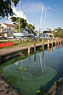 Mandeville, Louisiana, June 29, 2019- Cyanobacteria, refferred to as  blue-green algae, at a boat launch in Lake Pontchartrain.  The city closed the beached do to the algae outbreak which many blame on the openning of the spillway combined with the warm tempartures. Mandeville, is on the north shore of the lake, across from New Orleans.