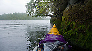 During low tide, a  sea kayaker takes refuge under the canopy of downed trees and roots.