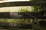 Spider in web on wooden fence