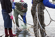 Salmon dipnetting on the Kenai Peninsula, Alaska, USA