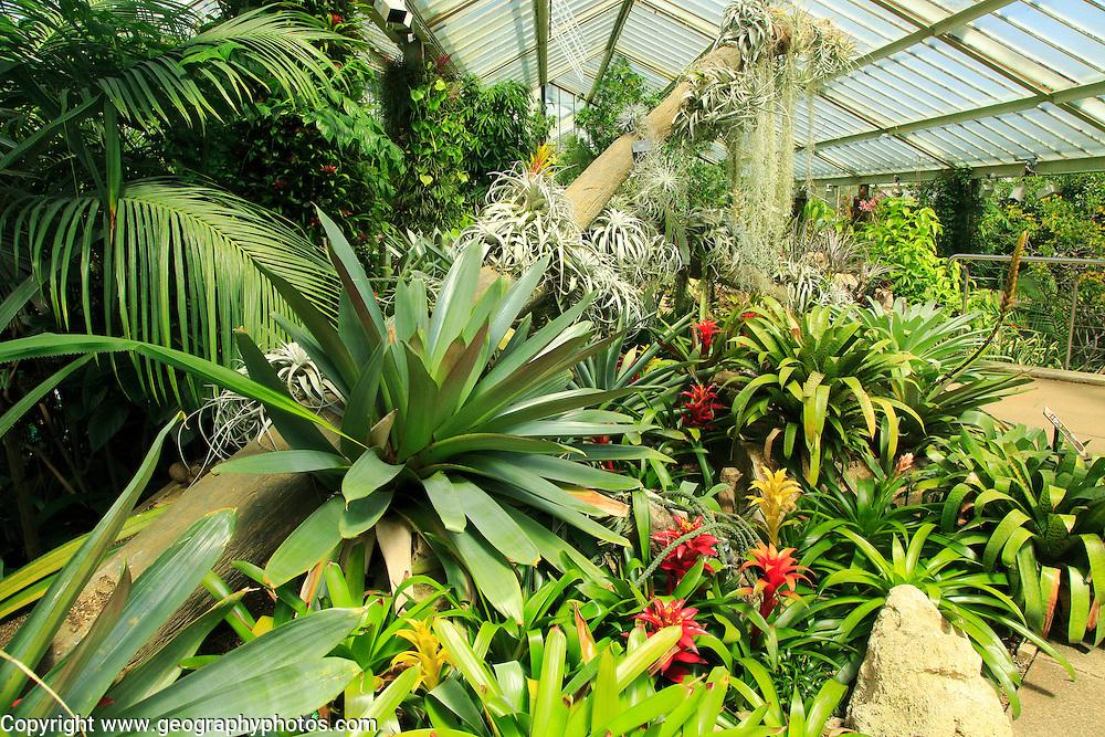 Tropical rainforest environment inside the Princess of Wales conservatory, Royal Botanic Gardens, Kew, London, England, UK