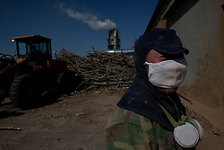 A worker is seen in a logging yard where chopped trees are turned into chip wood in Kunlun Qi in the Inner Mongolia Autonomous Region of China on 25 April 2011. Inner Mongolia, China's third largest province, is fighting severe desertification, much like the provinces of Xinjiang, Gansu, Qinghai, Ningxia, Shaanxi, Heilongjiang and Hebei. Over-grazing, logging, expanding farms and population pressure, along with droughts have steadily turned once fertile grasslands into sandy plains. China has adopted measures to stop the land degradation such as reforestation, resettling nomadic Mongolians from grasslands to urban areas and restricting grazing areas. Tree planting has become a key government effort to combat desertification and supporting the government's reforestation endeavors are numerous non-governmental organizations (NGOs), such as Shanghai Roots & Shoots. The NGO launched the Million Tree Project in 2007 in Kulun Qi with aims to plant its first million trees by 2014 to hinder the expanding desert. To-date, they have planted more than 600,000 trees.