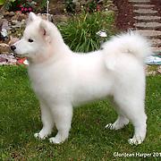 20140728 Erin Puppies