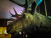 Moose head at Moose's Saloon