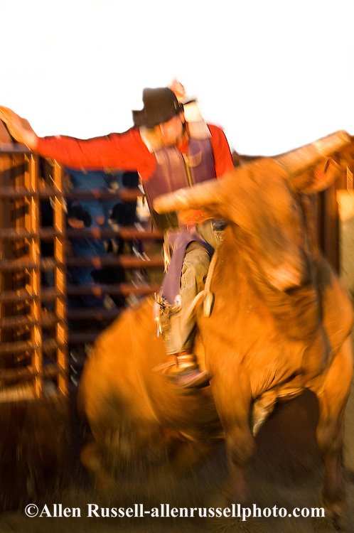 Bull Rider, Miles City Bucking Horse Sale, Montana, blurred motion, <br /> MODEL RELEASED