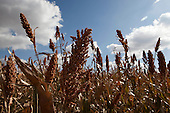 Agriculture and Food Security in Zambia, South Africa and Lesotho