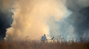 Gary Cosby Jr./Decatur Daily     Firefighters from Danville, Massey and Falkville work to control a fire burning in a sage field along West Lacon Rd. Friday afternoon.  Firefighters work the edges of the fire using flaps to extinguish the flames.