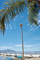 Danza de los Voladores  (Dance of the Flyers), or Palo Volador (pole flying), Chapala, Jalisco, Mexico. The ritual consists of dance and the climbing of a 30-meter pole from which participants launch themselves tied with ropes to descend to the ground.Photo: Peter Llewellyn