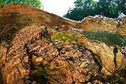 Eau de surface, rivière des Adirondak, New York, États-Unis. | Surface water, Adirondak river, New York, USA.