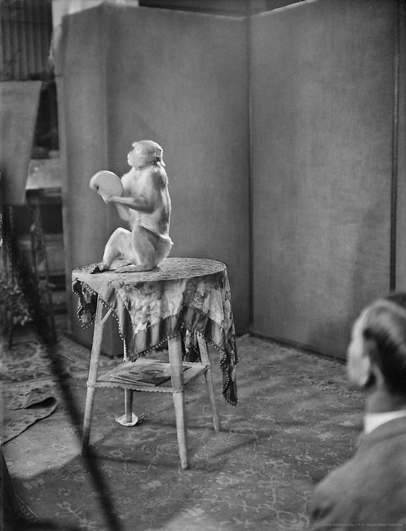 Working on a Scene with a Monkey, UFA Studios, Potsdam-Babelsberg, 1929