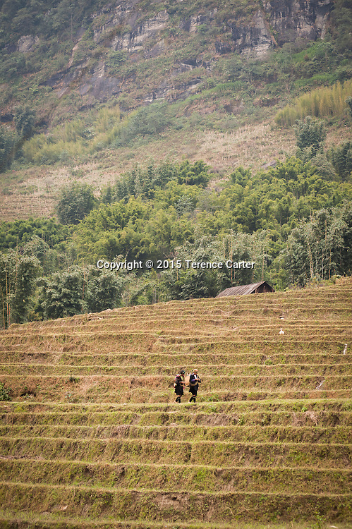 Hilltribe girls walk through the terraced rice fields above Sapa, Vietnam.