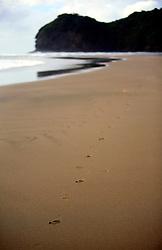 NEW ZEALAND PIHA BEACH 12DEC07 - Footsteps in the sand on Piha Beach, West Coast of northern Island, New Zealand...jre/Photo by Jiri Rezac..© Jiri Rezac 2007..Contact: +44 (0) 7050 110 417.Mobile:  +44 (0) 7801 337 683.Office:  +44 (0) 20 8968 9635..Email:   jiri@jirirezac.com.Web:    www.jirirezac.com..© All images Jiri Rezac 2007 - All rights reserved.