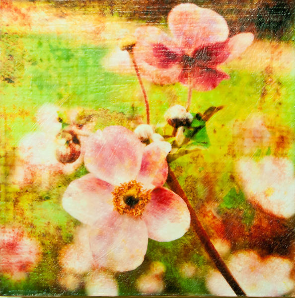 Japanese Anemone #2 Photo-Encaustic Art 10x10