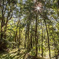 Ankaratra broadleaf forest