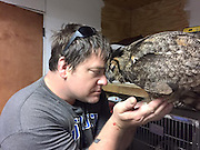 "Owl Recognizes The Man Who Saved Her, Gives Him The Most Heartfelt Hug<br /> <br /> GiGi, a great horned owl, was at death's door when she was brought to Wild at Heart Rescue, Mississippi. The poor thing suffered a massive head trauma, possibly after being hit by a car.<br /> ""This bird was one of the most critical we have ever taken care of,"" Missy Dubuisson, the rescue's founder, said. ""The fact that this bird has lived is beyond comprehension."" However, after an extensive treatment, GiGi got better. It probably wouldn't have been possible if not for the care of Douglas ""Doug"" Pojeky, known as the ""birds of prey whisperer.""<br /> ""In all my years of working with birds of prey, I have never seen someone with such a bond with these magnificent birds,"" Dubuisson explained. GiGi trusted Pojeky completely. When he was gone for some time to visit his family in Michigan, upon his return GiGi couldn't hold her excitement. Not only did she start dancing, she rested her head on his shoulder and hugged him. ""It literally brings tears to my eyes to watch him interact with these birds,"" Dubuisson added. ""They absolutely know him and trust him. It's the trust that you see in her face.""<br /> ©wildatheartrescue/Exclusivepix Media"