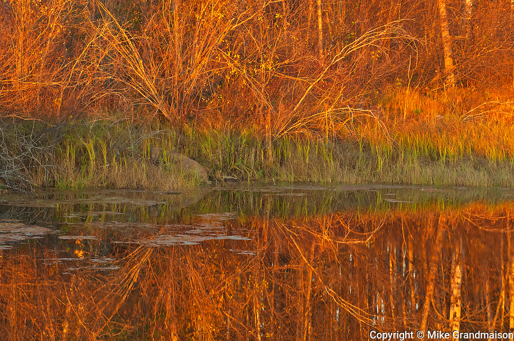 Reflection in pond at sunset<br />Whiteshell Provincial Park<br />Manitoba<br />Canada