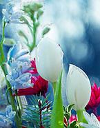 Tulip Grunge