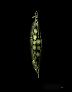Plants and flowers have secret emotional lives and personalities visible only through the camera lens.  Peas in a pod are not what you think they are.