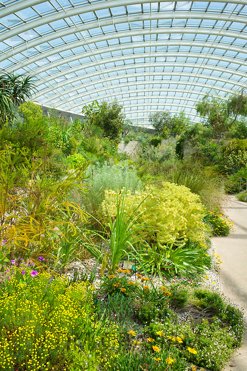 Exotic plants among horticultural exhibits within The Great Glasshouse of the National Botanic Garden of Wales, in Carmarthenshire, UK