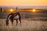 Williston, North Dakota, USA, 20111018: FLAMMEHAV. Om kvelden lyser gassflammene opp som tusener av sankthansbål rundt oljeboom-byen Williston i Nord-Dakota. Statoil kjøper Brighams oljefelter i Bakken-området. <br /> Foto: Ørjan F. Ellingvåg
