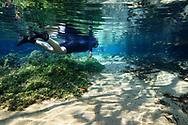 Schnorchelnde Touristen im Rio Olho D&acute;Agua, Bonito, Mato Grosso do Sul, Brasilien<br /> <br /> Snorkling tourists in the Rio Olho D&acute;Agua, Bonito, Mato Grosso do Sul, Brazil