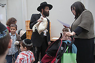 France. Brunoy ,  lubavitch yechiva Tom'hei Temimim , religious school,  The kapparot ceremony with chicken