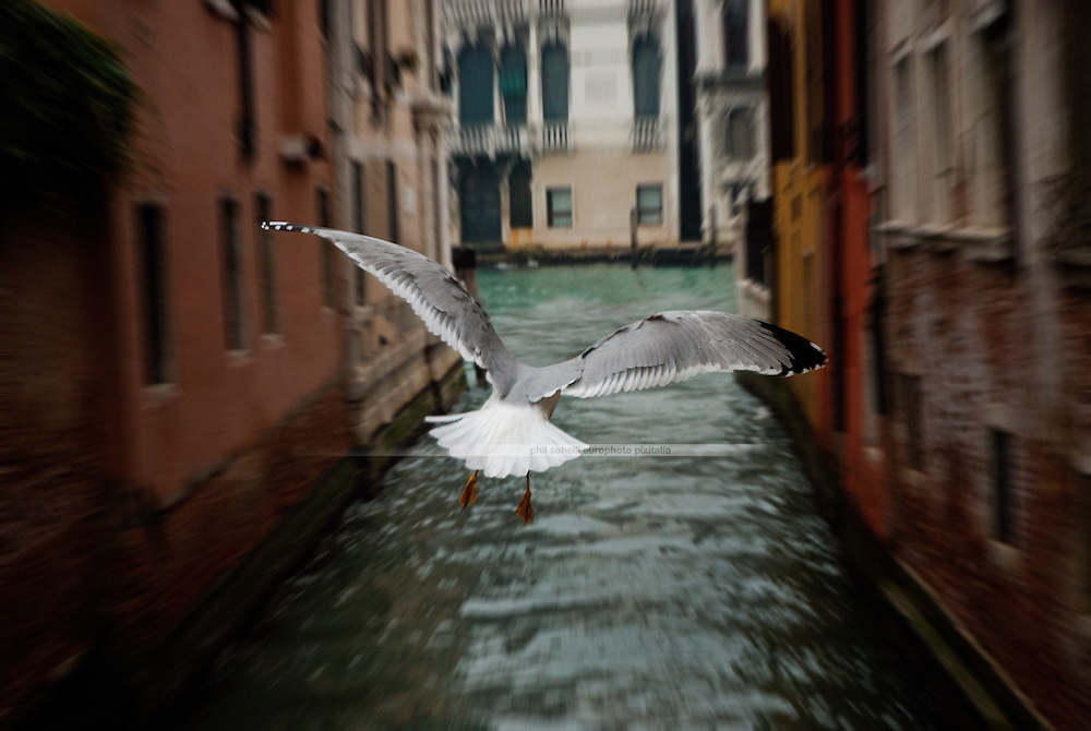 A dynamic picture of a seagull sailing towards Canal Grande in Venice.