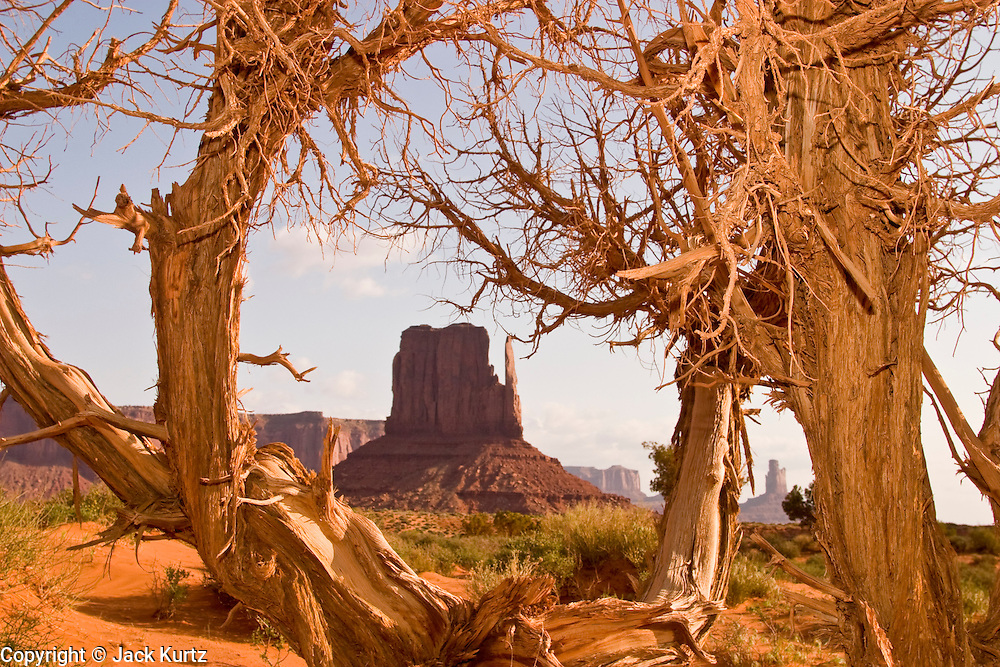 09 MAY 2003 -- MONUMENT VALLEY TRIBAL PARK -- The East Mitten rock formation framed by a tree in Monument Valley, on the Arizona - Utah state line. PHOTO BY JACK KURTZ
