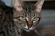 This cat is from the Chemung County SPCA.