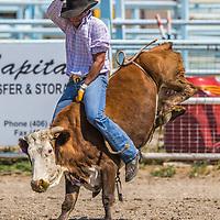 Men's Cow Riding