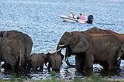 Chobe River Front National Park, Botswana, Southern Africa, Africa.© Z&D Lightfoot.www.Lightfootphoto.com