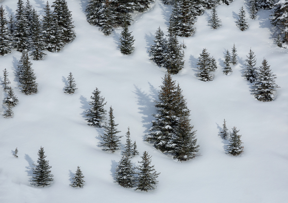 Trees in snow along the  Icefields Parkway, Banff National Park, Alberta, Canada