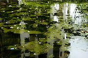 A garden pond in a neighbourhood in Singapore