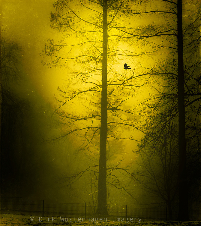 Yellow tinted photograph of crows in a tree on a misty winter morning