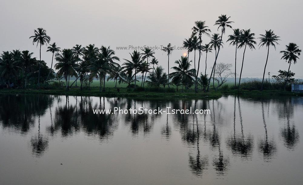India, Kerala backwaters, Landscape