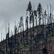 The remanants of a wildfire burn near the town of Leavenworth, Washington.