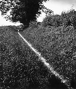 Pilgrim's Way, Kent 1950
